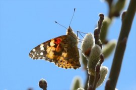 Bayburt'ta ilkbahar Güzelliği