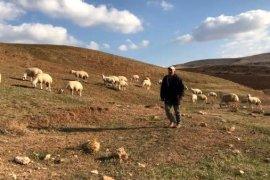 Çiftçilere 5 Bin Koyun Dağıtımı Yapıldı