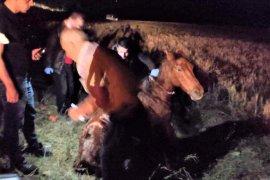 Bayburt'ta Yaralı Atın Yardımına