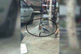 Bayburt'ta Cips Çalan Karga Kameraya Yakalandı