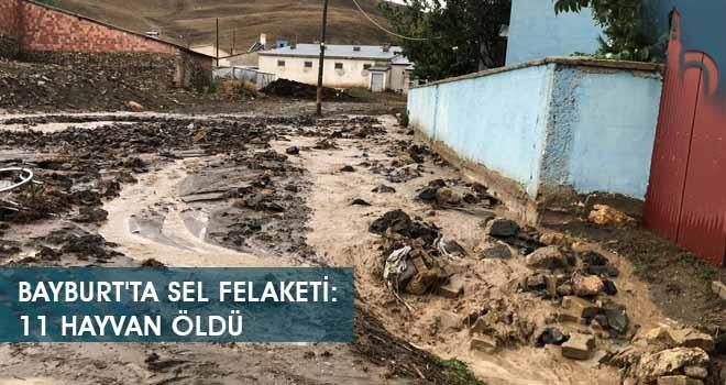 Bayburt'ta Sel Felaketi: 11 Hayvan Öldü