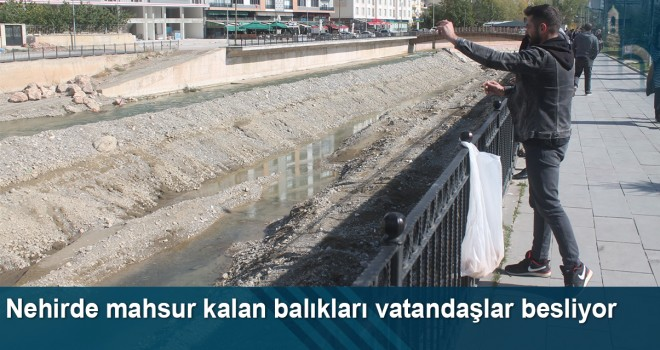 Nehirde Mahsur Kalan Balıkları Vatandaşlar Besliyor