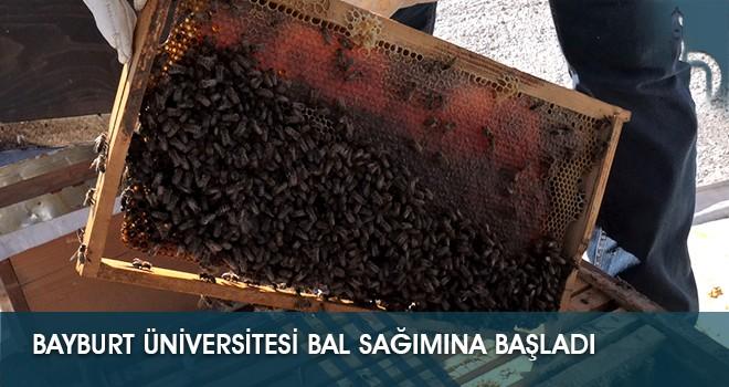Bayburt Üniversitesi Bal Sağımına Başladı