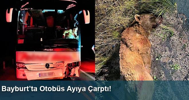 Bayburt'ta Otobüs Ayıya Çarptı!