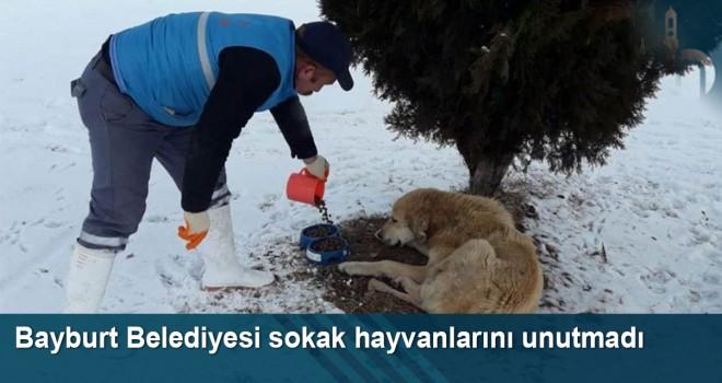 Bayburt Belediyesi sokak hayvanlarını unutmadı