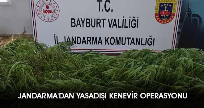 Jandarma'dan Yasadışı Kenevir Operasyonu