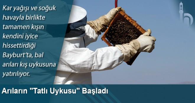 Arıların
