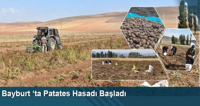 Bayburt 'ta patates hasadı başladı
