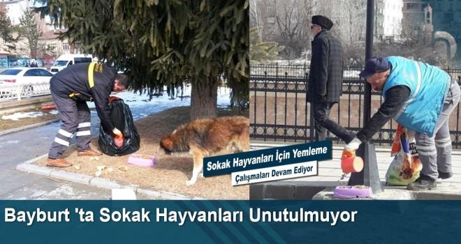 Bayburt 'ta Sokak Hayvanları Unutulmuyor