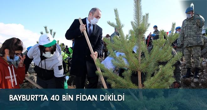 Bayburt'ta 40 Bin Fidan Dikildi