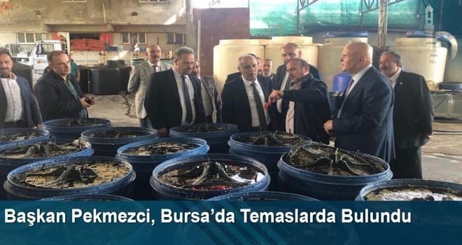 Başkan Pekmezci, Bursa'da Bir Dizi Temaslarda Bulundu
