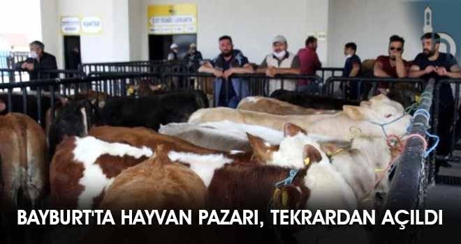 Bayburt'ta Hayvan Pazarı, Tekrardan Açıldı