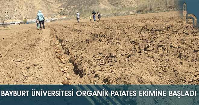 Bayburt Üniversitesi Organik Patates Ekimine Başladı