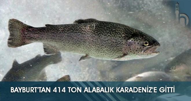 Bayburt'tan 414 Ton Alabalık Karadeniz'e Gitti