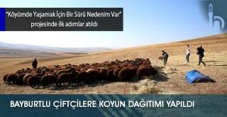 Bayburtlu Çiftçilere Koyun Dağıtımı Yapıldı