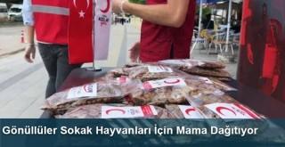 Gönüllüler Sokak Hayvanları İçin Mama Dağıtıyor