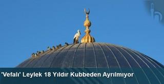 'Vefalı' Leylek 18 Yıldır Kubbeden Ayrılmıyor