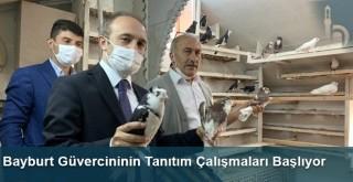 Bayburt Güvercininin Tanıtım Çalışmaları Başlıyor